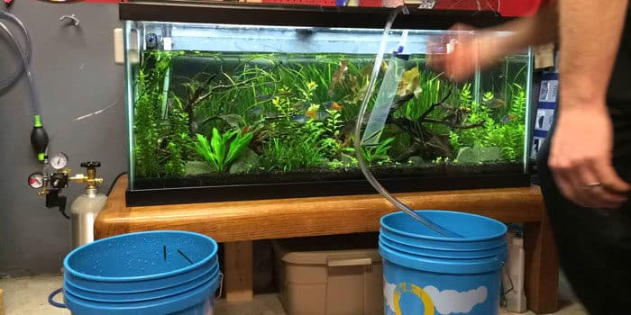 Tips On Getting Aquarium Cheap Do Your Maintenance Duties And Learn Aquaticmag 9440136