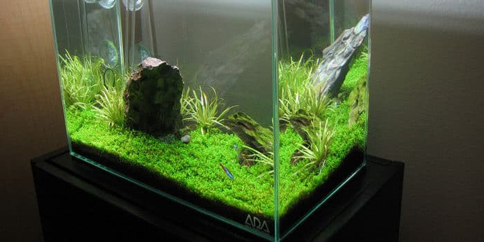 Tips On Getting Aquarium Cheap Dont Buy Exepensive Or Fancy Equipment Aquaticmag 2121549