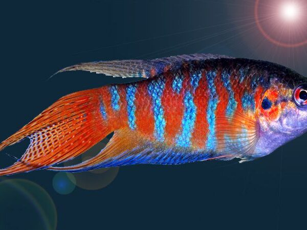 Paradisefishcover 570581a65f9b581408c9eaef 3336653 600x450