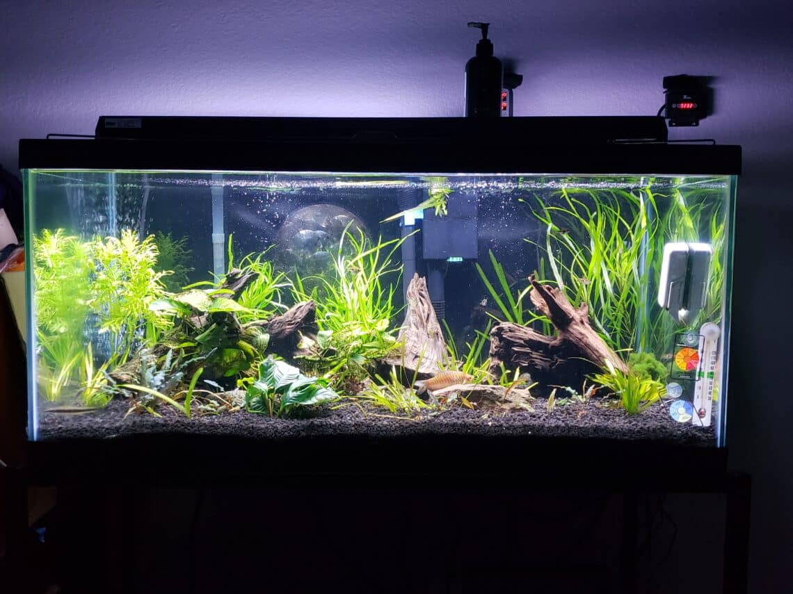 40b-planted-project-tank-2
