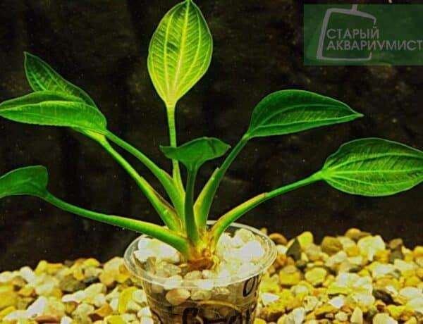 Opacus From Verde 25n 6824400 600x460