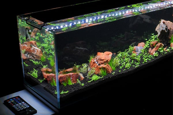 Current Usa Satellite Freshwater Led Plus Review 9128905