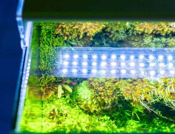 Aquarium Led Light 8084382 600x460