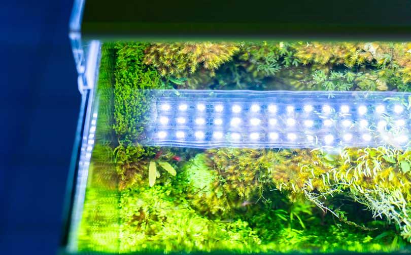 led-light-color-for-planted-tanks-3