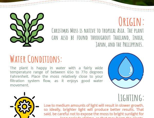 Christmas Moss Care Guide 1 1437965 600x460