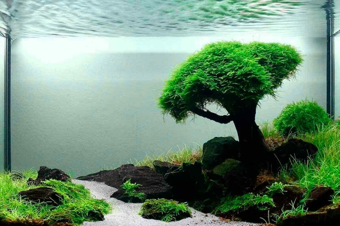 introduction-to-aquascaping-3