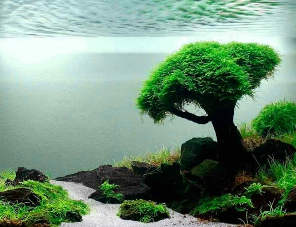 Aquascaping For Beginners. Introduction 4829474 600x460