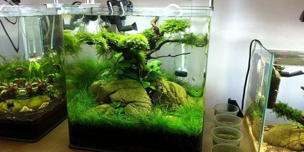 big-vs-nano-aquariums-3
