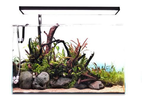 adding-wood-hardscapes-into-an-aquarium-3