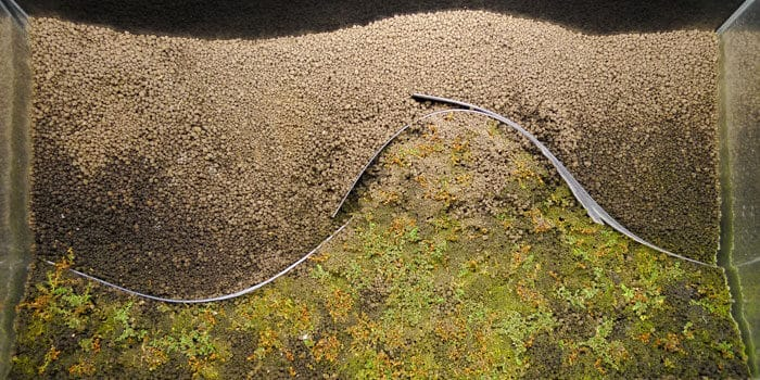 Dry Start Method Dsm Mold Algae Web Spider Roots Failed Attempts Aquaticmag 2500143