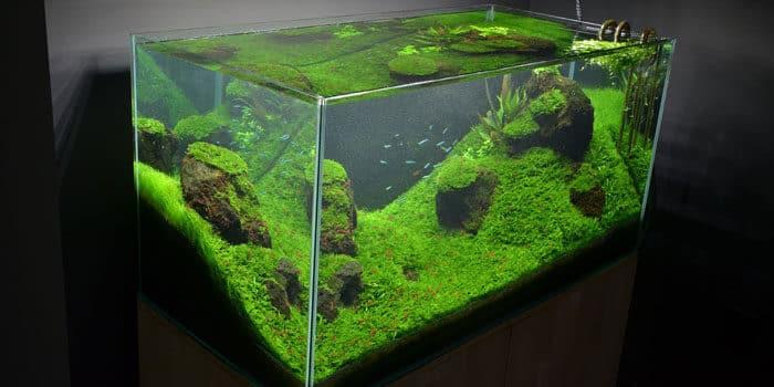 Rimless Aquarium Tank Benefits Aquaticmag 6686120
