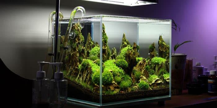 Simple Nano Rimless Aquarium Tank Aquaticmag 5379841