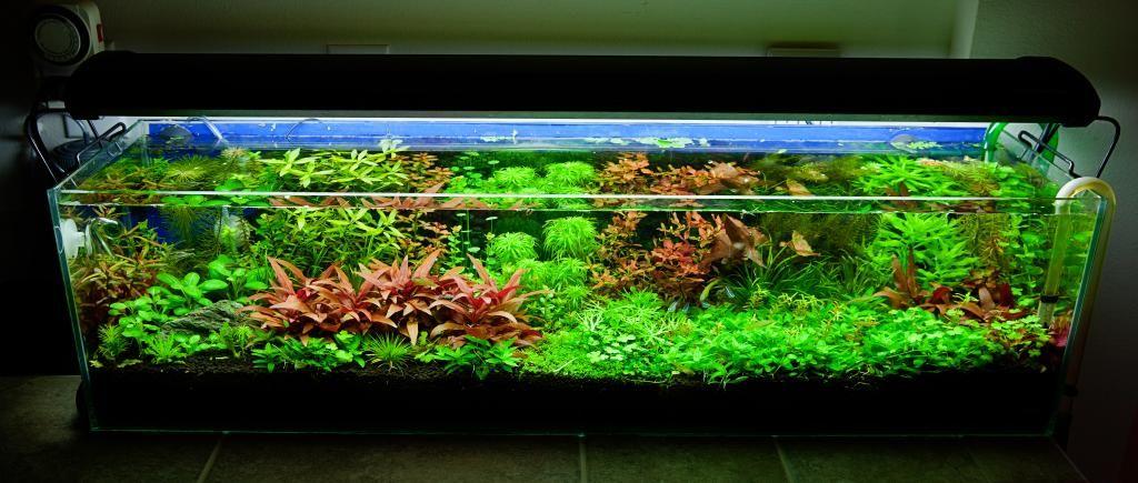 12-gallon-long-dutch-style-aquascape-2