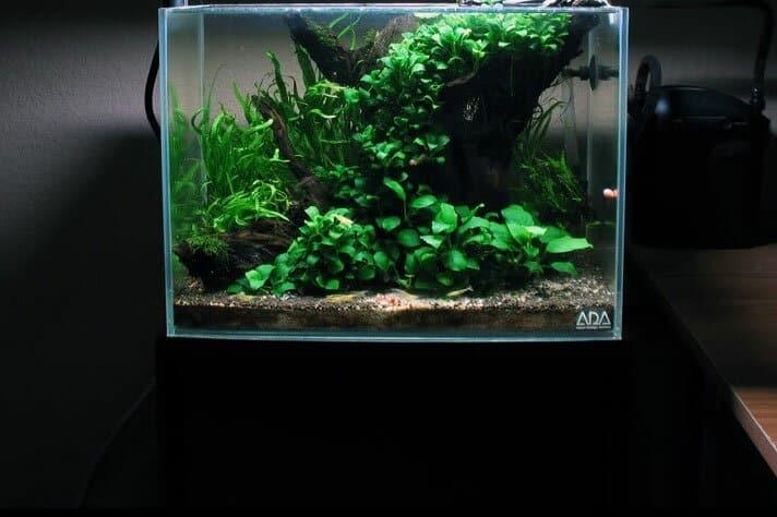 Low Tech Planted Tank Low Maintenance Aquarium Plant List 1 Aquaticmag