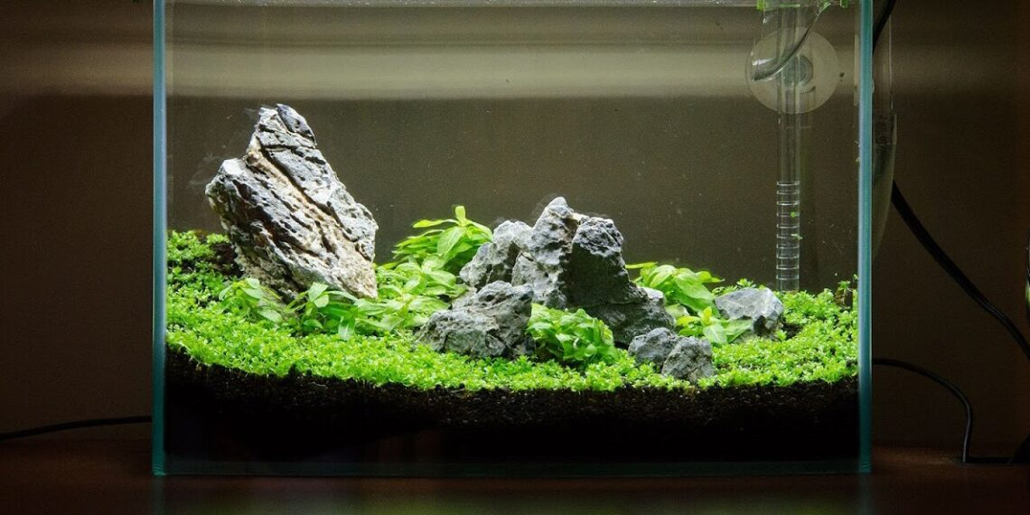 Starting With A Nano Aquarium Redcherryshrimp 1140x570