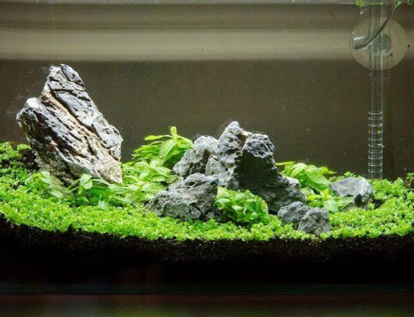 Starting With A Nano Aquarium Redcherryshrimp 600x460