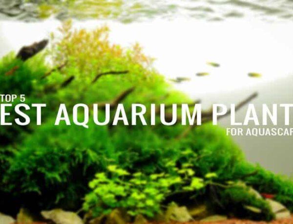 The Top 5 Best Aquarium Plants For Aquascaping Aquaticmag 600x460