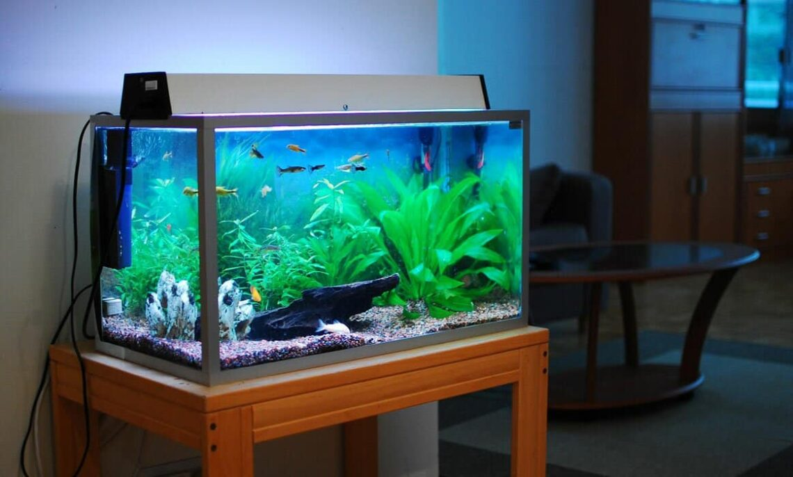 5-effective-tips-to-get-your-own-aquarium-for-cheap-2